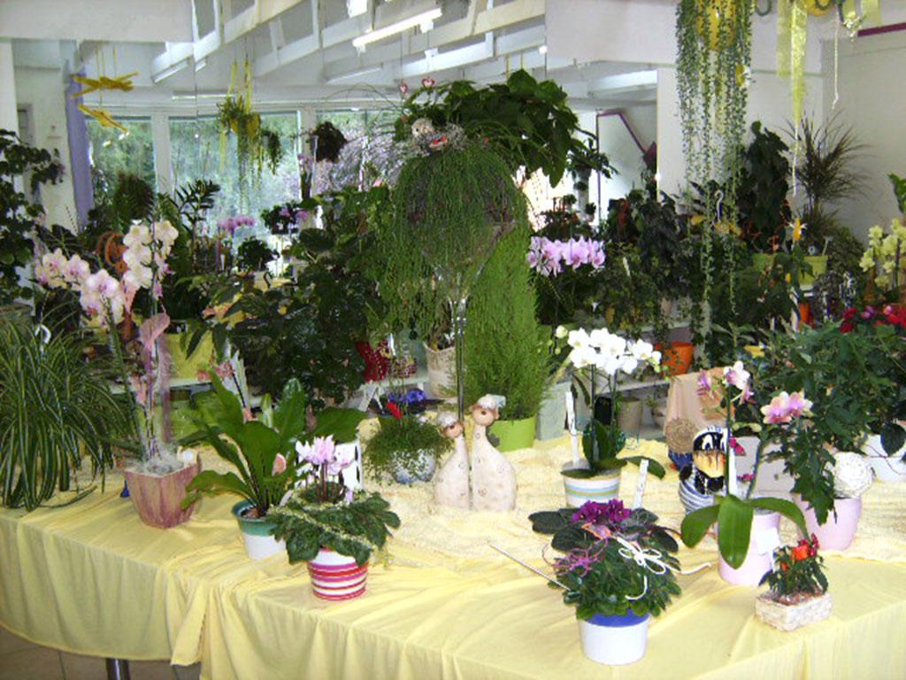 Pflanzenarrangement